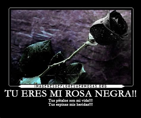 imagenes de rosas negras con frases tristes nuevas im 225 genes de rosas negras g 243 ticas con frases