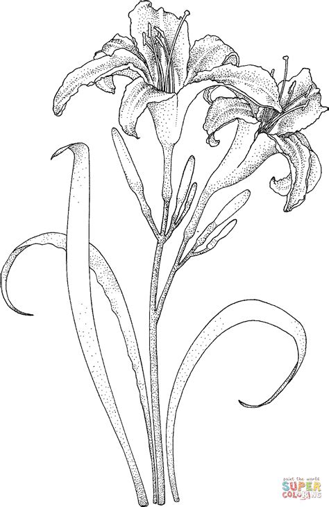lilies coloring page free printable coloring pages