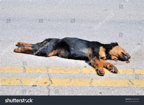 3d roadkill dog dog road kill stock photo 30452347 shutterstock