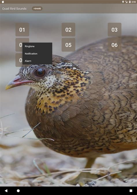 quail call sounds android apps on google play