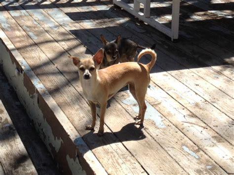 big friendly dogs pet friendly cabin rentals destination big