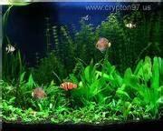 screen saver bernuansa ikan dalam akuarium