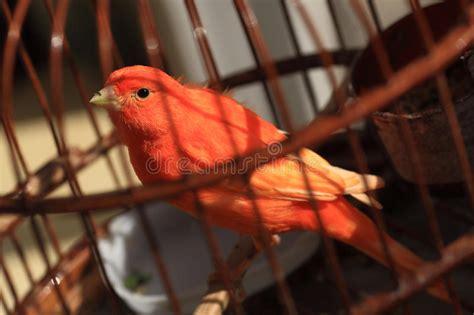 uccello in gabbia uccello in gabbia immagine stock immagine di gabbia