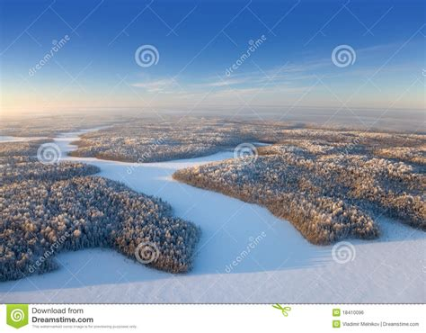 frosty forest royalty free stock top view forest plain in a frosty day royalty free stock