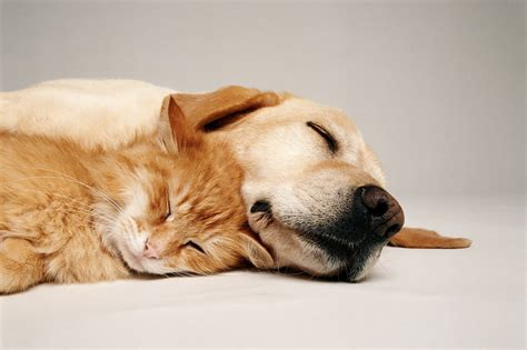 dreams about dogs harvard psychologist on the meaning of pet dreams