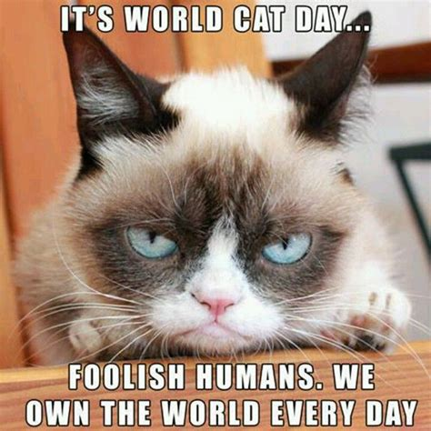 the grumpiest grumpy cat memes to sadden your day snappy