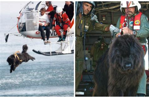 puppies rescued in italy amazing dogs jump from helicopters and boats to save lives