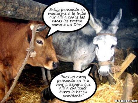 imagenes graciosas vacas imagenes divertidas de animales im 225 genes graciosas y