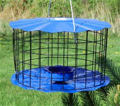 Bluebird Feeder Brand New Quot Bluebird Nut Quot Inspired Bluebird Feeder For