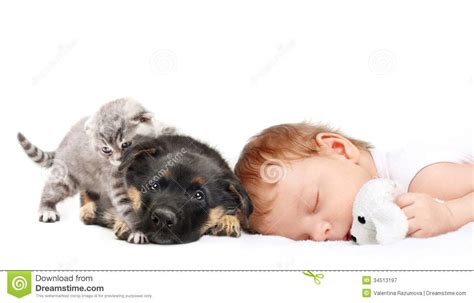 baby puppies and kittens sleeping baby boy and puppy stock image image 34513197