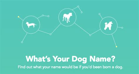 puppy name generator the top names in new york city rover