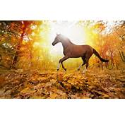 Nature Forest Leaves Fall Horse Free Desktop Backgrounds And