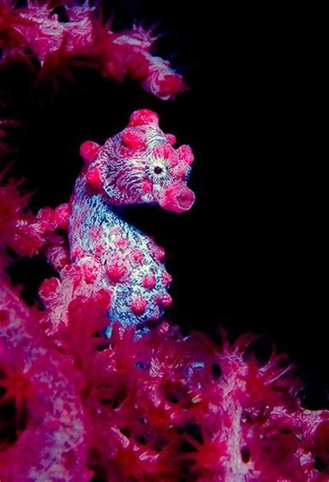 17 best ideas about seahorses on 25 best ideas about seahorses on seahorse