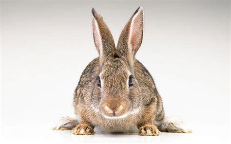 coding rabbit hare wallpaper wallpapersafari