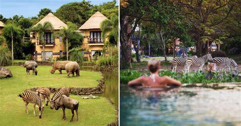 best safari park bali safari marine park review 13 things to do