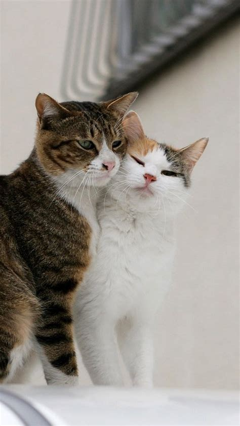wallpaper cat love cats hairy lovely kittens cat eye cute wallpapers 1920