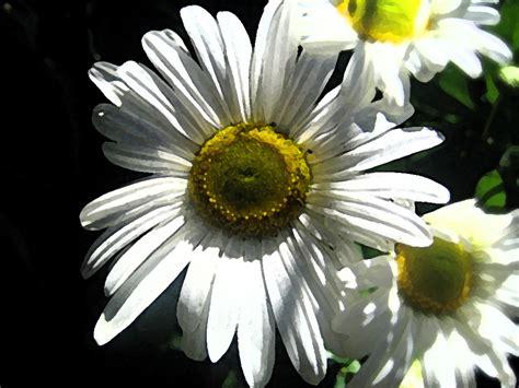alberi e fiori pianeta gratis wallpaper e sfondi alberi e fiori fiori