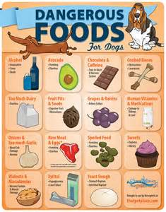 dangerous foods for dogs infographic thatpetplace