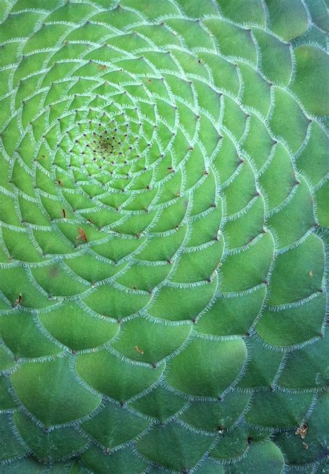 number pattern in nature the golden spiral in nature sapient paradox