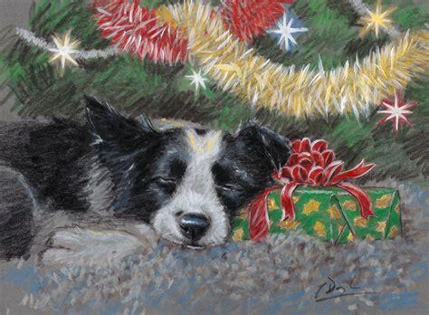 border collie pack   christmas cards sweet dreams  paul doyle