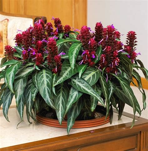 29 most beautiful houseplants you never knew about 29 most beautiful houseplants you never knew about