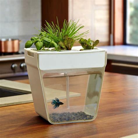 acquario casa sinta se como um peixe na 193 gua um aqu 225 em casa