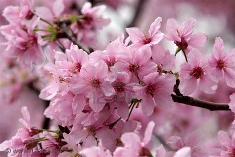 immagini fiori primavera i fiori modellano la tua silhouette la