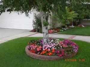 landscaping under a maple tree front yard before and
