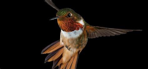 hummingbirds nature pbs