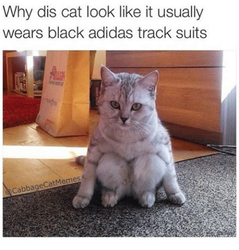 Cat In Suit Meme - 25 best memes about adidas and cats adidas and cats memes