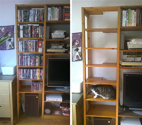 diy cat ladder cat and cat furniture