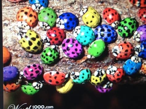 colors of ladybugs adventures of saksafras