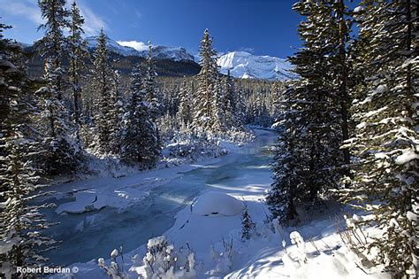Sprei Winter California photography in kananaskis country the canadian nature
