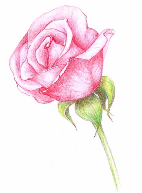 Drawings Of Flowers by 35 Beautiful Flower Drawings And Realistic Color Pencil