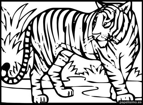 imagenes para pintar tigre 24 animales para colorear para ni 241 os papelisimo
