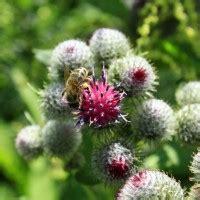 fiori di bach elenco e propriet 224