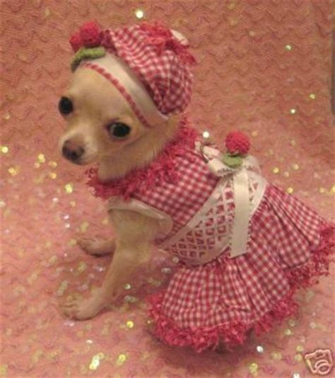 chihuahua puppy clothes cherry dress set chihuahua clothes clothes for my pets juxtapost