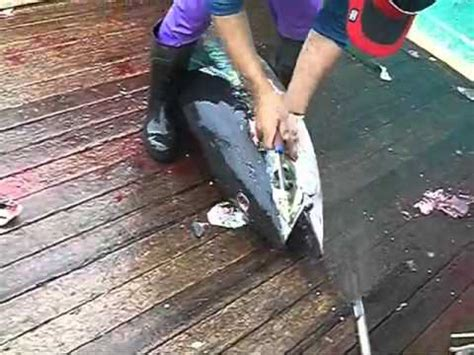 la vera bestia il dolore tonno laverabestia org animal