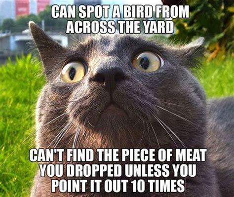 random funny memes 20 pics