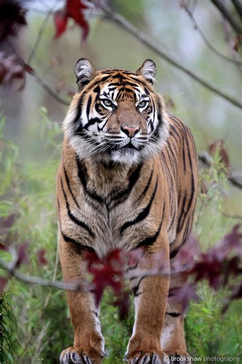 8 Reasons I Animals by A Tiger Tiere Und Tier