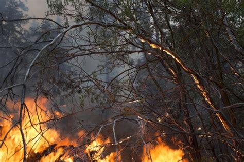provincia di potenza ufficio ambiente incendi sei presidi straordinari nel potentino ufficio