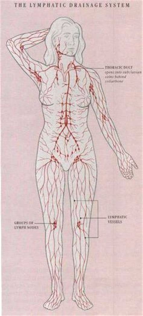 Lymphatic System Detox Foot Bath by Lymphatic System All Great Spots To To Get The
