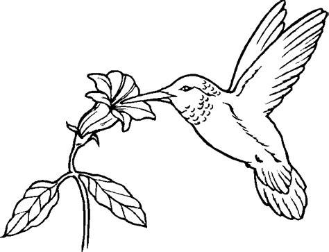 coloring book pages bird bird coloring pages free printable pictures