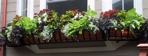 Best Flowers For Planter Boxes by Best Plants For Shade Container Gardening
