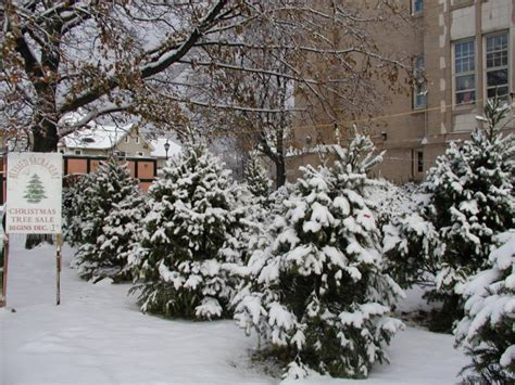 blessed sacrament christmas tree sale rochester ny