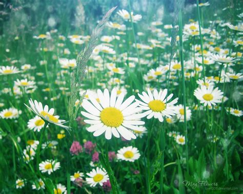 may flowers 9 by love1008 on deviantart