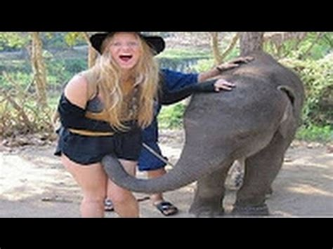 funny videos funny clips funny pictures breakcom animali divertenti video di animali divertentissimi che
