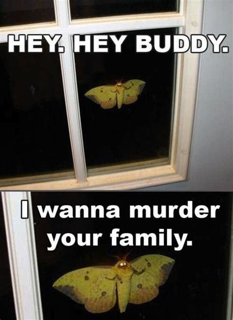 Meme Com Funny Pictures - really funny memes i will murder your whole family