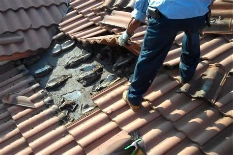 Cool House Pictures bat infestation under tile roof daily picks and flicks
