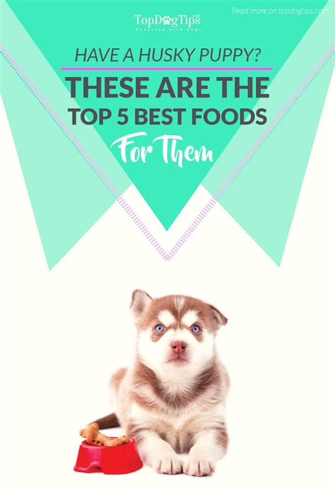 top food for puppies top 5 best food for husky puppies to raise them healthfully